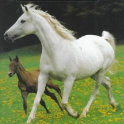 voici des prenoms pour les chevaux, poulain, poney